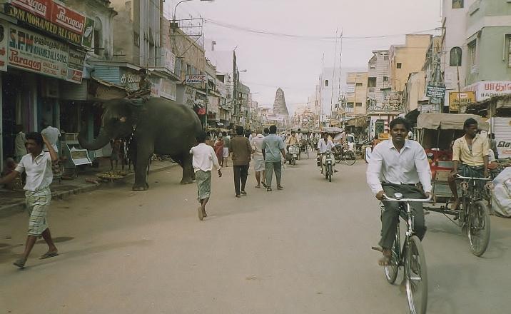 Elephant street scene